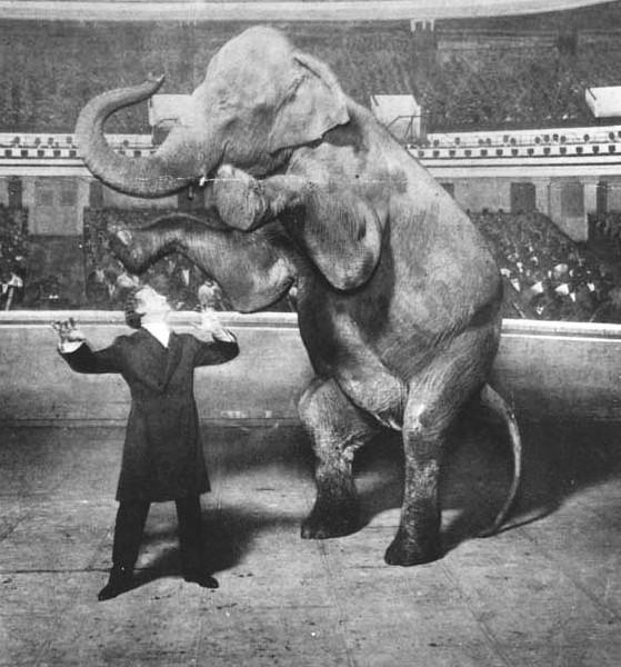 Harry Houdini and Jennie, the Vanishing Elephant, 1918. (Photo: White Studio)