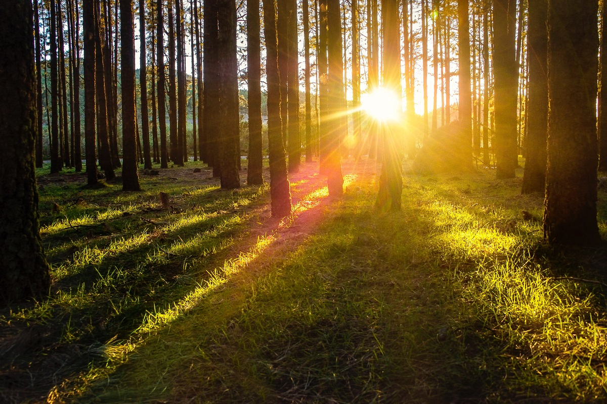 The sun shining through the trees in a forrest. (Photo: Christian Buehner / Unsplash)